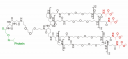 Polímero levunililo de la Proteína de Eritropoyésis Sintética (SEP)